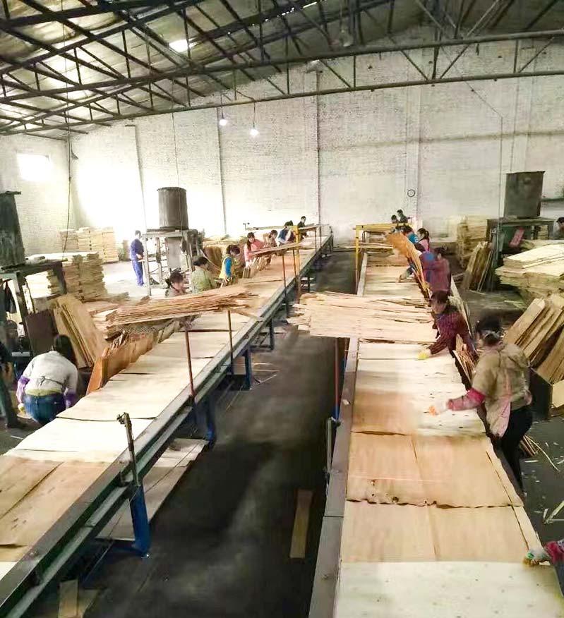 灰狼木业建筑模板生产现场