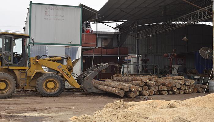 建筑模板桉木原木